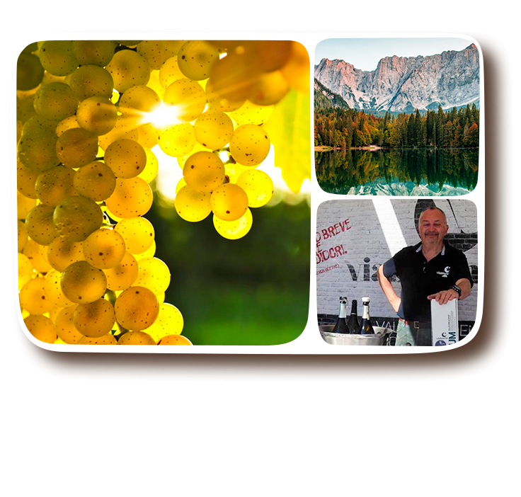 Viaboschi-Friuli-chiaro-eng